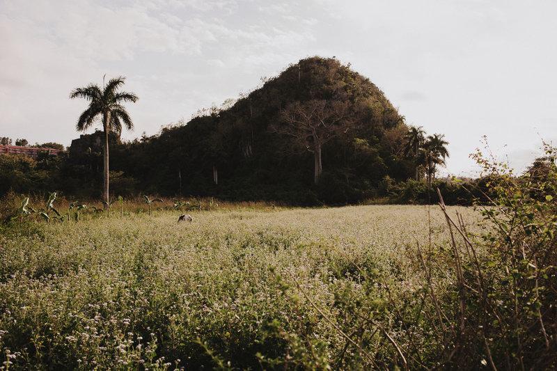 Cuba (292)