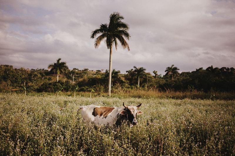 Cuba (295)